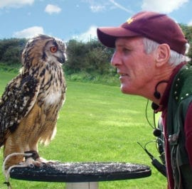 Falconry Centre Owl